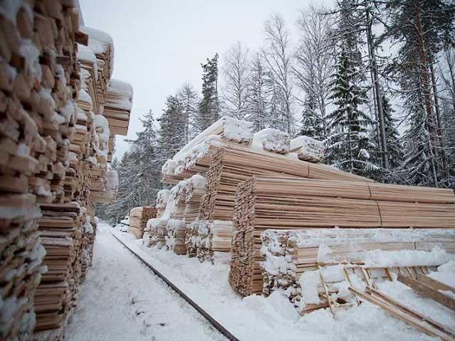 Зимний лес | Характеристики, цены, где купить
